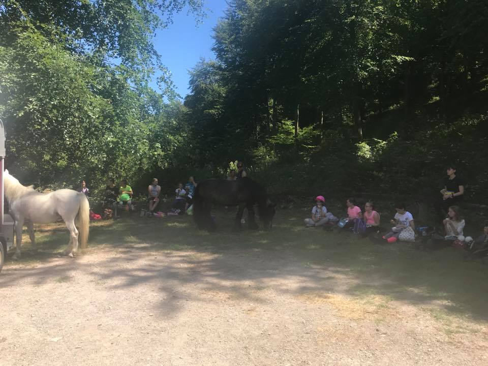 Walk Outs Horse Riding Walk Outs At Fort Widley